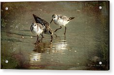 Three Together Acrylic Print