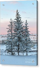Three Trees Acrylic Print