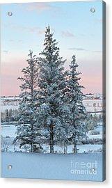 Three Trees Acrylic Print by Ronda Kimbrow