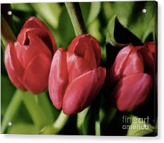 Three Tulips Acrylic Print by Susan  Lipschutz