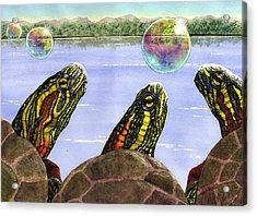 Three Turtles Three Bubbles Acrylic Print