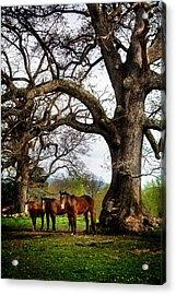Three Under A Tree Acrylic Print by Greg Mimbs