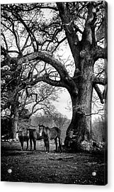 Three Under A Tree In Black And White Acrylic Print by Greg Mimbs