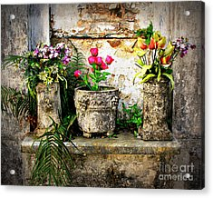 Three Vases Acrylic Print by Perry Webster