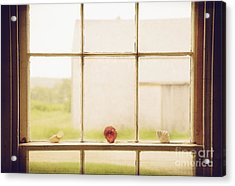 Acrylic Print featuring the photograph Three Window Shells by Craig J Satterlee