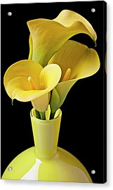 Three Yellow Calla Lilies Acrylic Print by Garry Gay