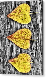 Three Yellow Leaves Acrylic Print