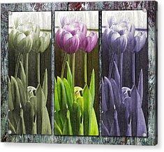 Threelips Acrylic Print by Tom Romeo