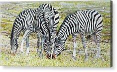 Three's Company Acrylic Print