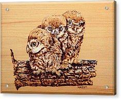 Three's Company Acrylic Print by Ron Haist