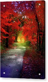 Through The Crimson Leaves To A Golden Beginning Acrylic Print