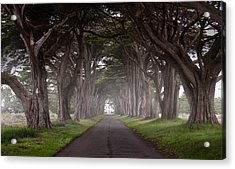Through The Cypress Acrylic Print