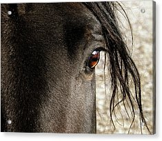 Through The Eye Of A Stallion Acrylic Print