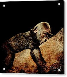 Through The Eyes Of Hasani . Square Acrylic Print by Wingsdomain Art and Photography