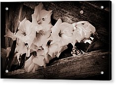 Through The Fence Acrylic Print by Diane Reed