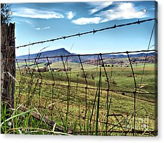 Through The Fence Acrylic Print by Kathy Jennings
