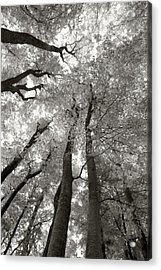 Through The Forest 2 Acrylic Print by Marjan Jankovic