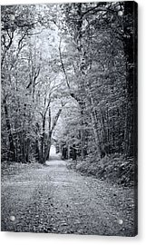 Through The Forest Acrylic Print by Sue OConnor