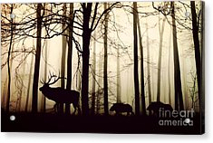 Through The Forest Acrylic Print by Thomas Jones