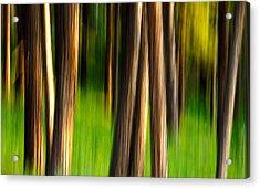 Through The Forest Acrylic Print