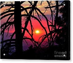 Through The Pines Acrylic Print