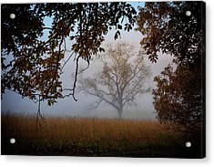 Through The Trees In The Mist Acrylic Print by Rick Berk