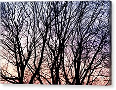 Through The Trees Acrylic Print by Martin Rochefort