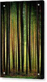 Through The Woods Acrylic Print by Svetlana Sewell