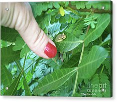 Acrylic Print featuring the photograph Thumb Sized by Megan Dirsa-DuBois