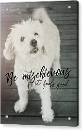 Thumper Dog Quote Acrylic Print by JAMART Photography