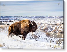 Thunder In The Snow Acrylic Print