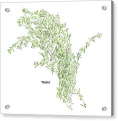 Thyme Acrylic Print