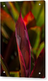Ti Plant Acrylic Print