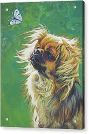Tibetan Spaniel And Cabbage White Butterfly Acrylic Print by Lee Ann Shepard