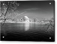 Tidal Basin Jefferson Memorial Acrylic Print
