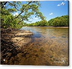 Tidal Mangrove Estuary - Von D Mizell Eula Johnson State Park Acrylic Print
