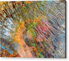 Tidal Pool And Coral Acrylic Print by Todd Breitling