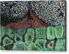 Tide Pool Acrylic Print by Jim Zipp