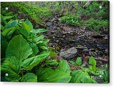 Tierney Springtime - New England Forest Acrylic Print