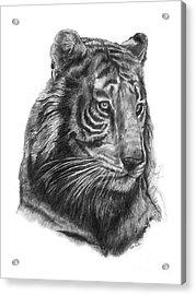 Tiger 1 Acrylic Print