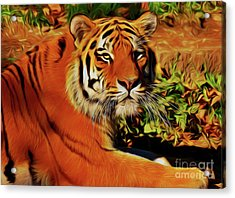 Tiger 22218 Acrylic Print