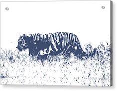 Tiger 4 Acrylic Print