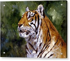 Tiger Alert Acrylic Print by Silvia  Duran