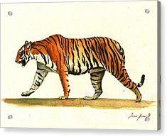 Tiger Animal  Acrylic Print by Juan Bosco