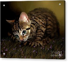 Tiger Ball Acrylic Print by Robert Foster