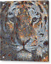 Tiger Acrylic Print by Boy Sees Hearts