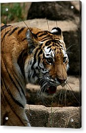 Acrylic Print featuring the photograph Serching by Cathy Harper