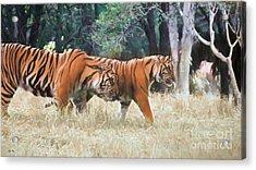 Tiger Crossing Acrylic Print by Judy Kay