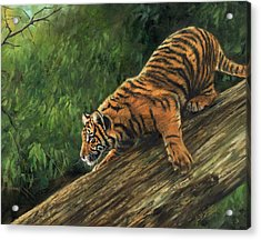 Acrylic Print featuring the painting Tiger Descending Tree by David Stribbling
