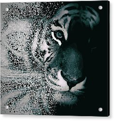 Tiger Dispersion Acrylic Print